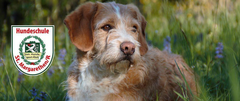 STHK Hundeschule St.Margarethen/Raab
